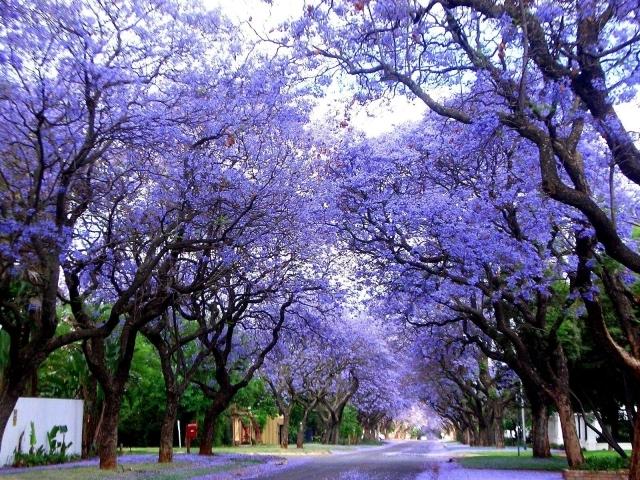 Primavera_a_cagliari_.jpg